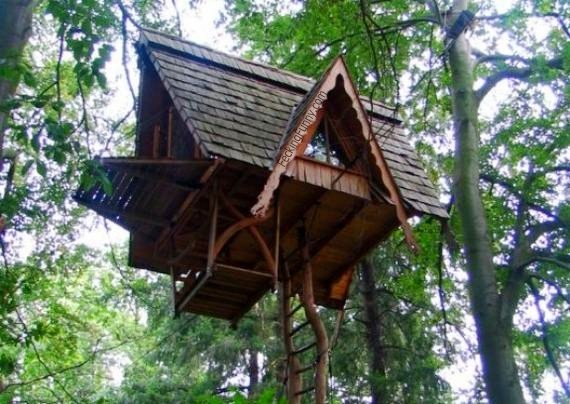 Funny tree top house