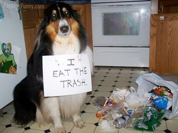 Guilty dog: eating trash
