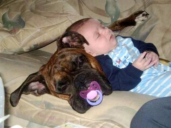 dog pillow