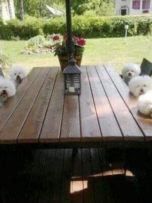 dogs waiting  for breakfast