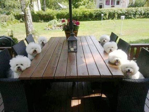 dogs-waiting-for-breakfast