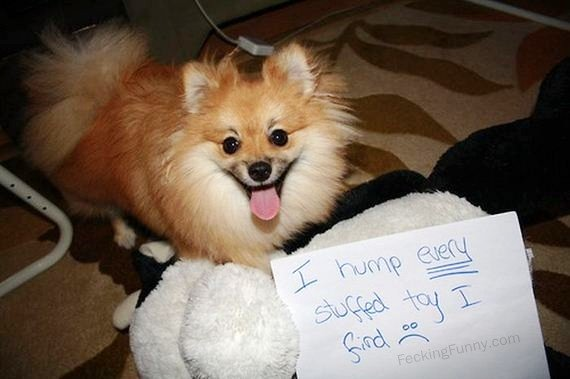 guilty-dog-hump-stuffed-toys