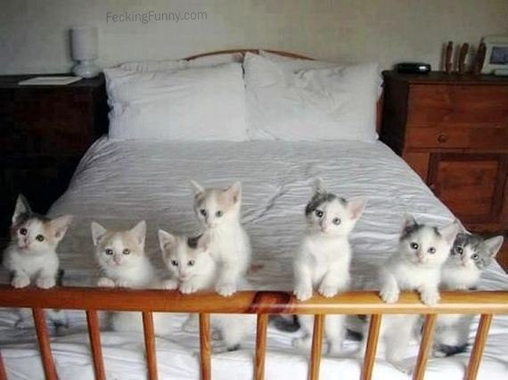 Cats waiting for bedtime story