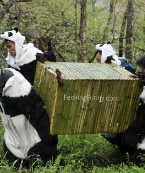 Fake pandas in zoo