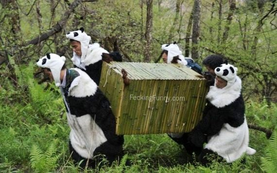 fake-pandas-in-zoo