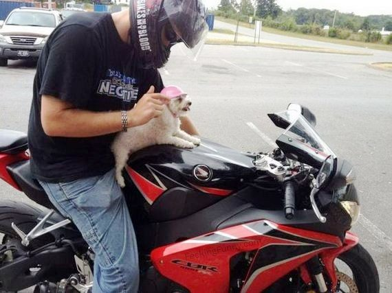 helmet-for-dog