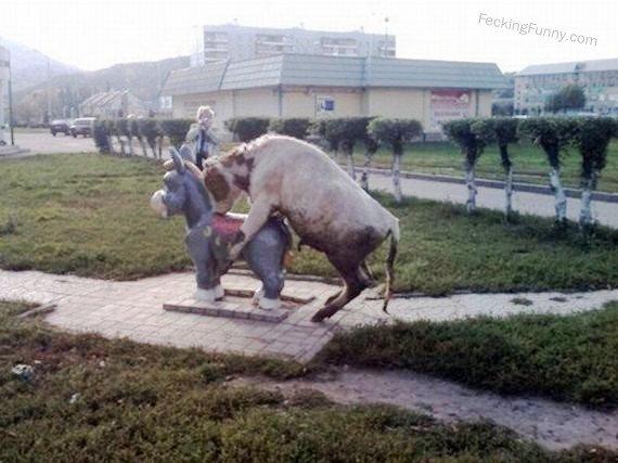 Horny bull