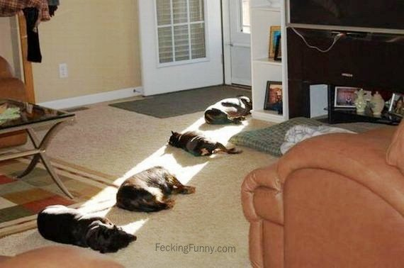 queuing-dogs-and-cats