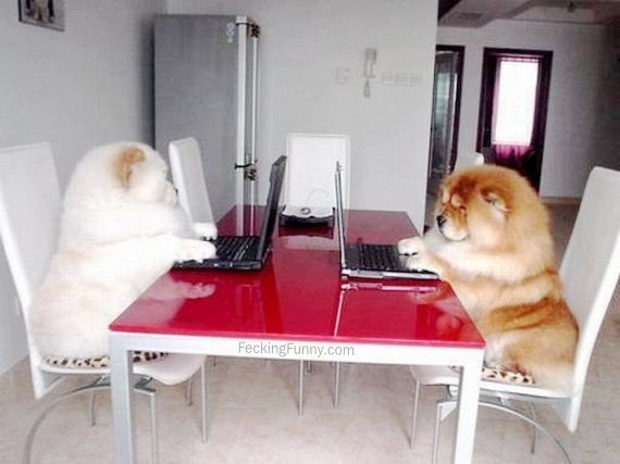 Two chatting dogs