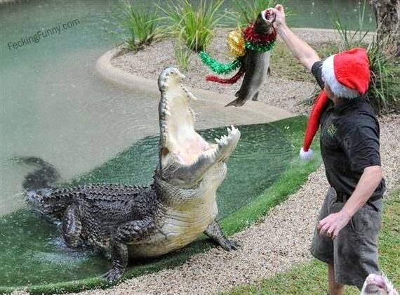 christmas-gift-for-crocodile