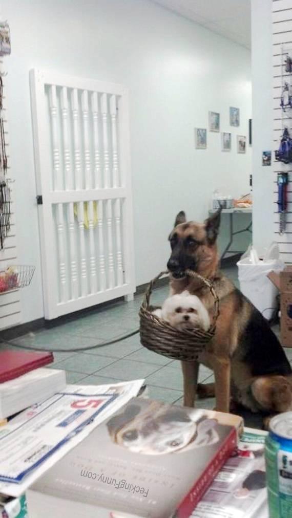 dog-baby-sitting