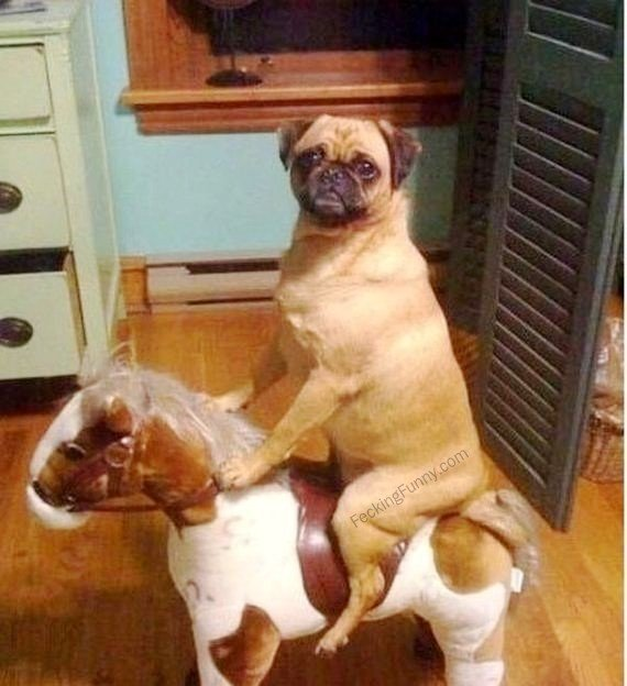 dogs-horse-ride