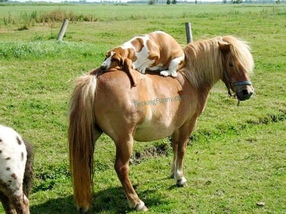 funny-dog-horse-riding