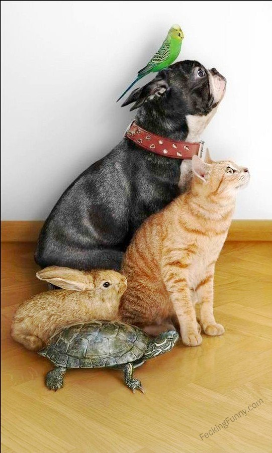 interspecies-friendships