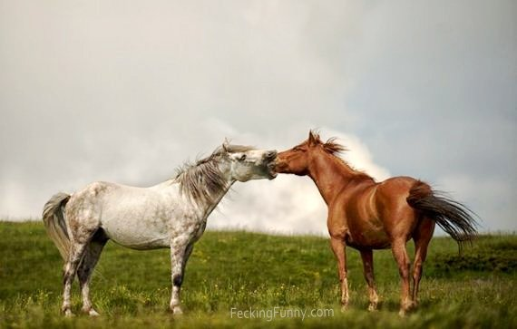 deep-kissing-horses