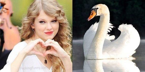 pop-star-mimic-swan