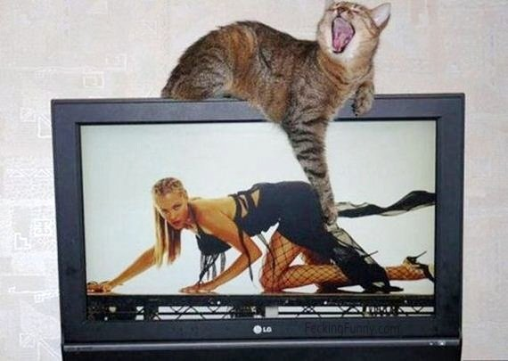 cat-touching-butts-in-tv