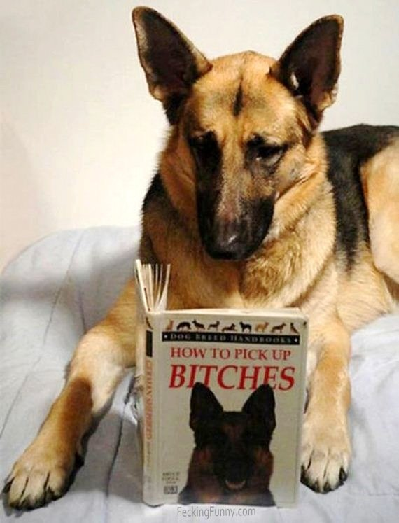 A reading dog: how to pick up bitches