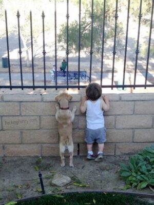 Funny dog and kid looking outside