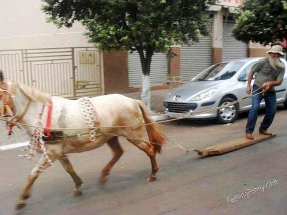 horse-surfing