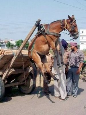 Overloaded horse cart