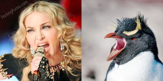 Pop star mimics bird