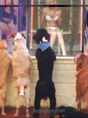 Even dogs like windows girls