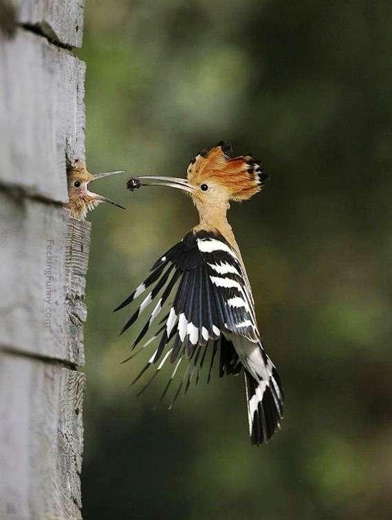 Feeding baby birdI