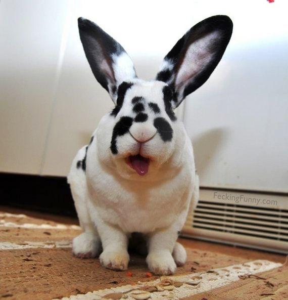 funny rabbit hiding its eyes