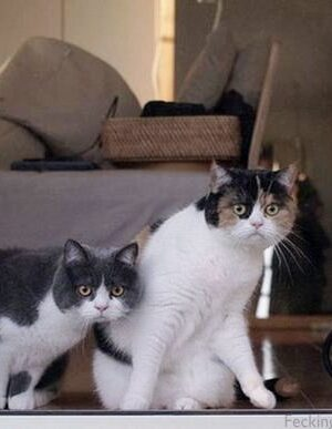 Two funny cats