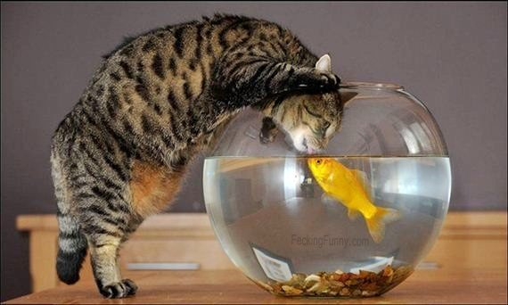 cat-and-fish