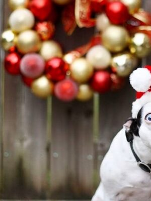 Dog dressing up for Christmas