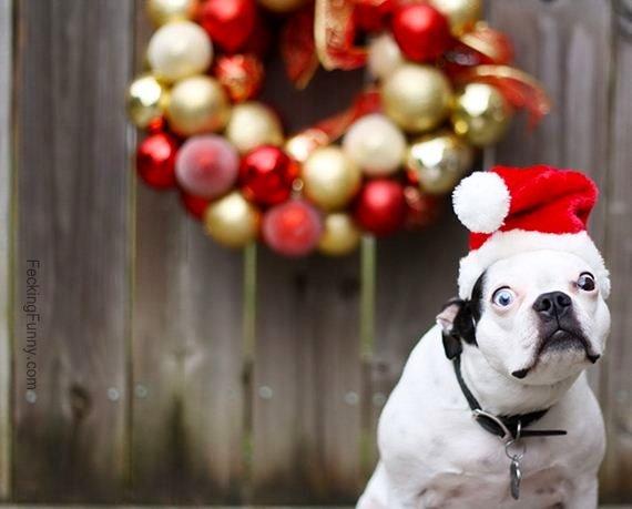 christmas-dog