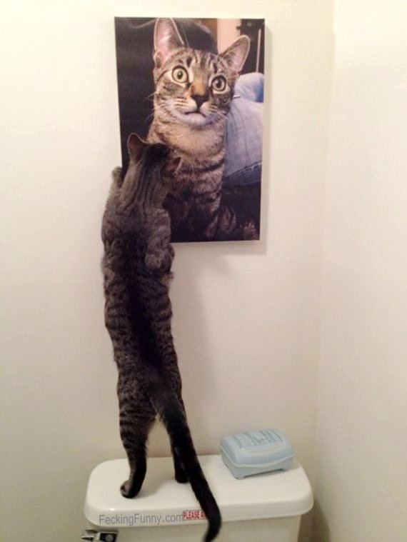 funny-cat-looking-at-photo