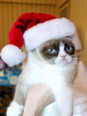 Funny Christmas cat