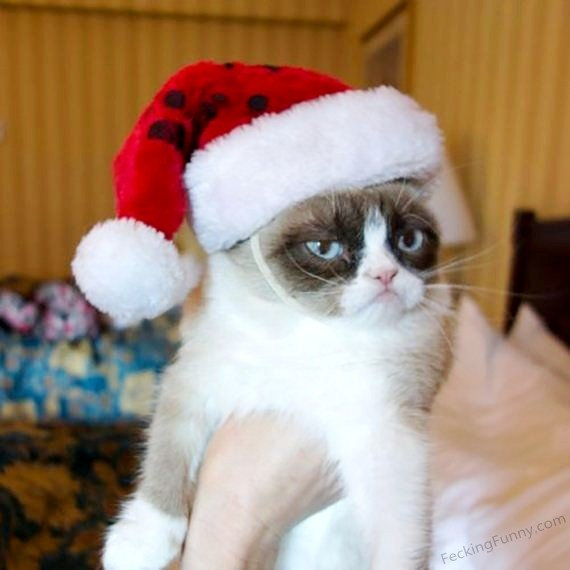 funny-christmas-cat