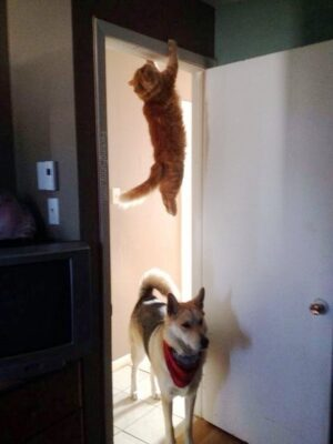 Funny dog and cat: hide and seek