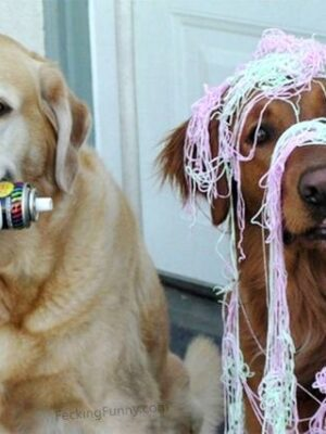Funny party dogs