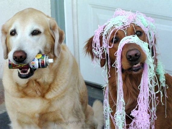 funny-dogs-party