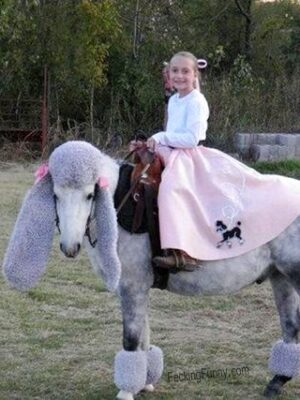 Funny goat riding
