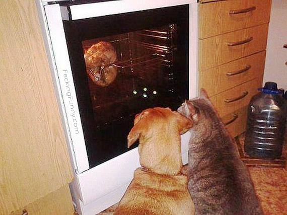 dog-cat-watching-oven